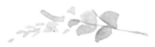 1470919361-Flora-Flowers-1